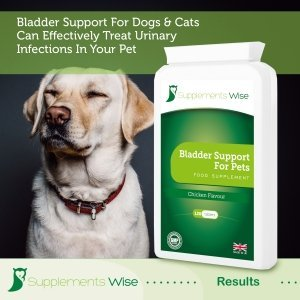 dog urine infection treatment