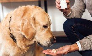 dog probiotics